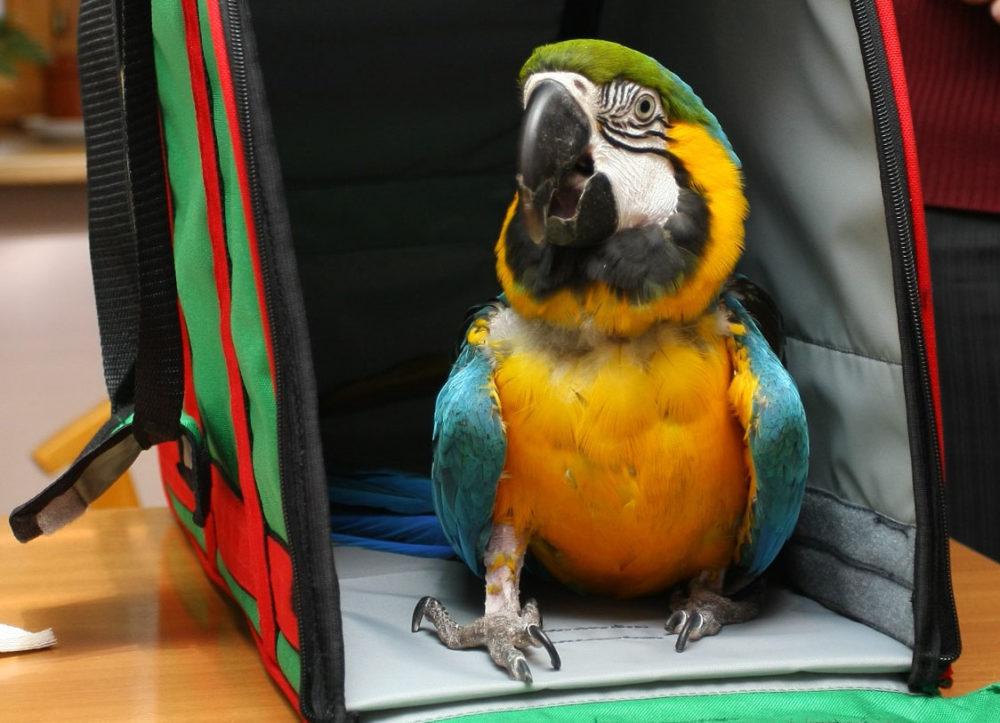 попугай в сумке-переноске авиаперелет