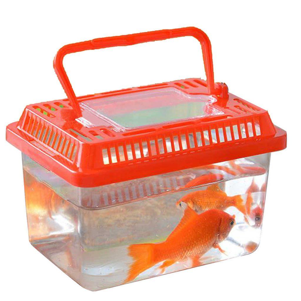 рыбка в контейнере-переноске