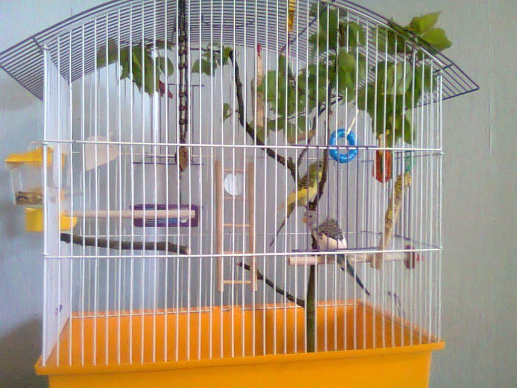 попугаи в клетке перелет