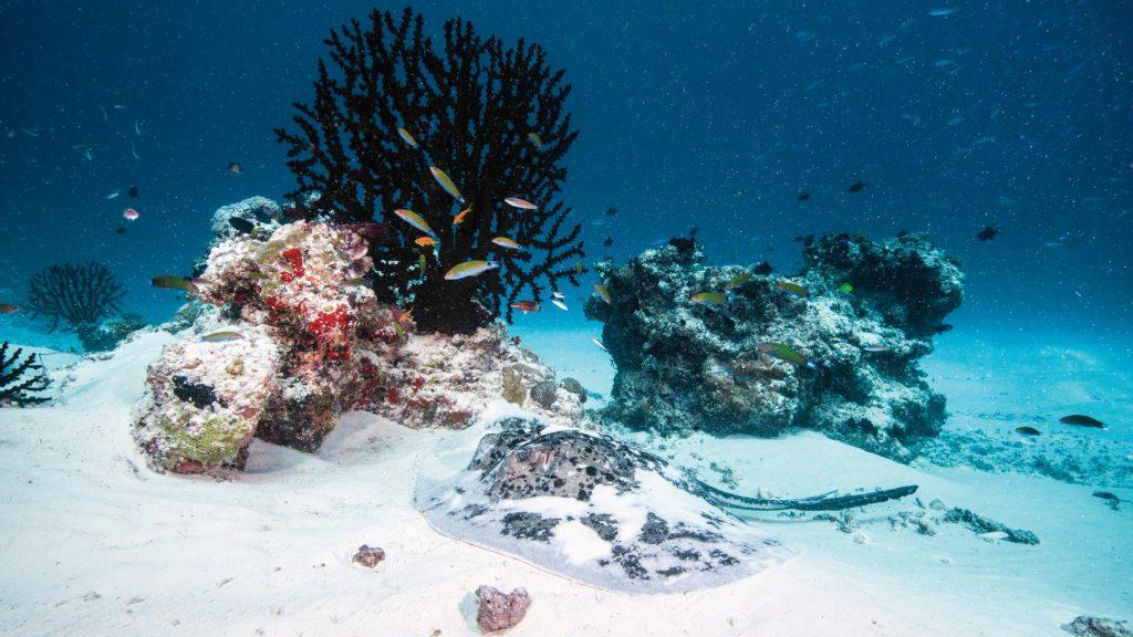 Мальдивы дайвинг под водой фото