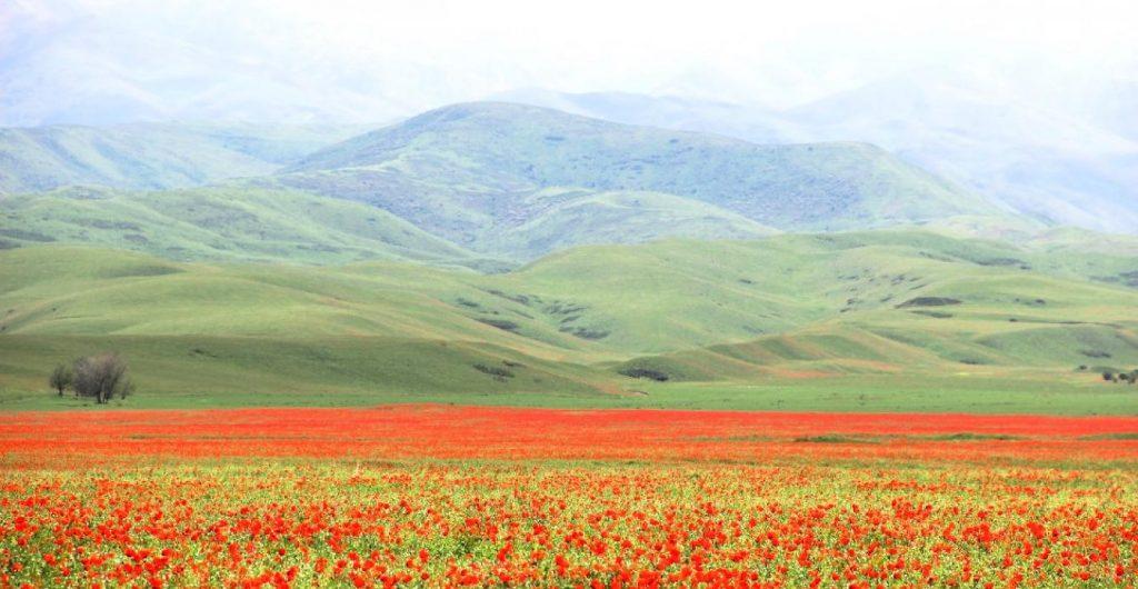 Ферганская долина маки цветы горы Узбекистан