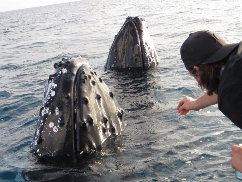 Киты в России Териберка туры Баренцево море