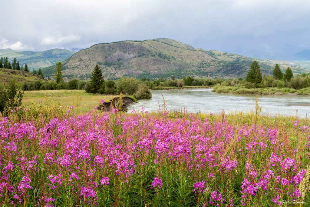 Горный Алтай красивые фото