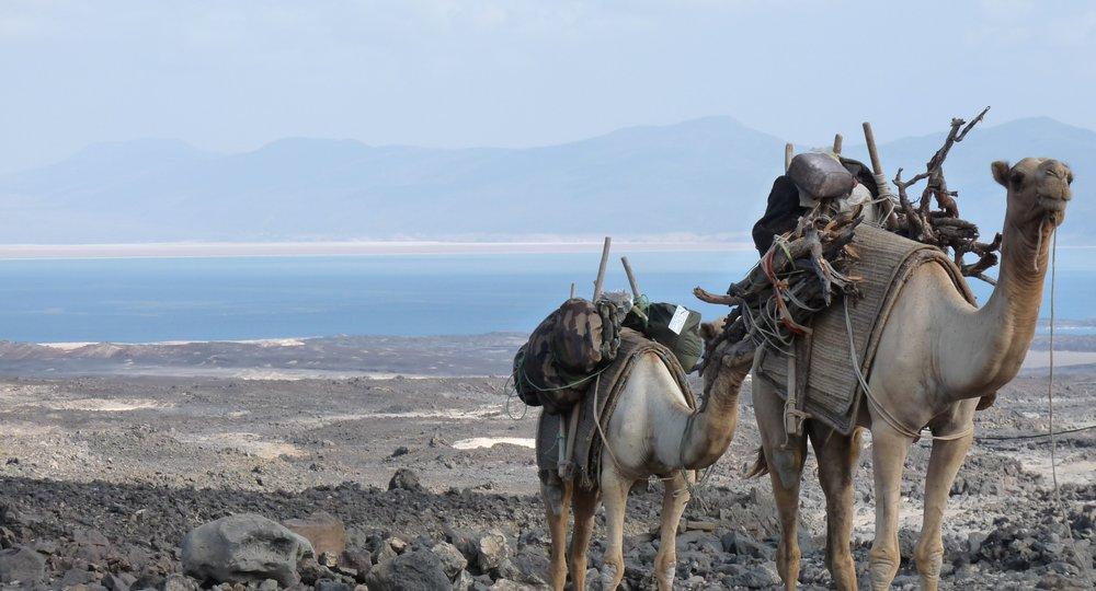 Cheap flights from San Francisco to Djibouti