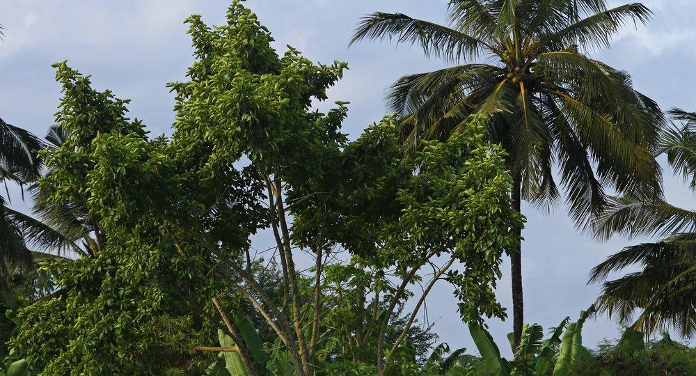 flights to Bissau