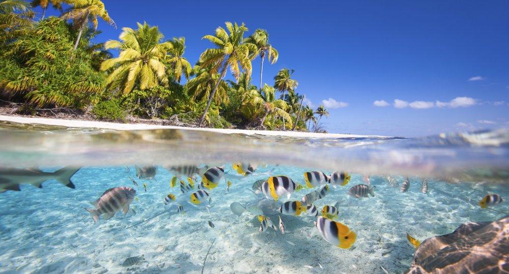 flights to Tikehau Atoll